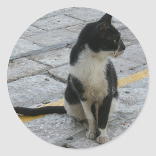 Cat on pavement round stickers
