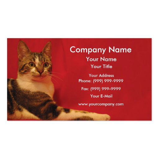 Cat on red background business card