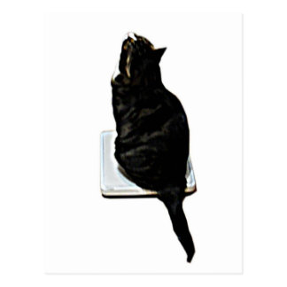 Cat on scales postcard