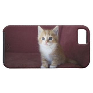 Cat on sofa iPhone SE/5/5s case
