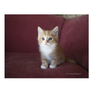 Cat on sofa postcard