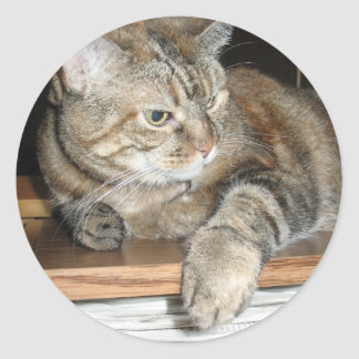 cat on the bookshelf classic round sticker