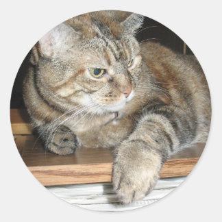 cat on the bookshelf classic round sticker