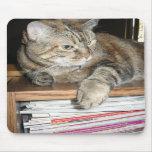 cat on the bookshelf mouse pad