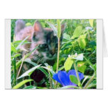 Cat on the Prowl in the Garden Greeting Card