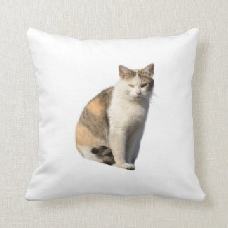 Cat on  throw pillow
