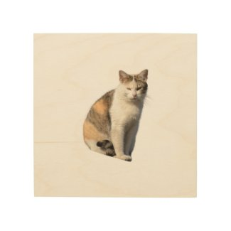 Cat on  throw pillow wood wall art
