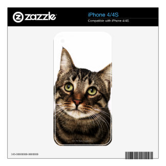 Cat on white background 2 iPhone 4S decal