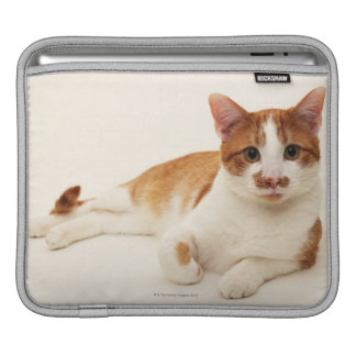 Cat on white background sleeve for iPads