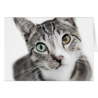 Cat on White Greeting Card
