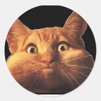 CAT OOPS PEGATINAS REDONDAS