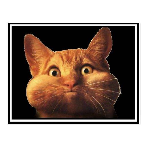 CAT OOPS POSTCARD