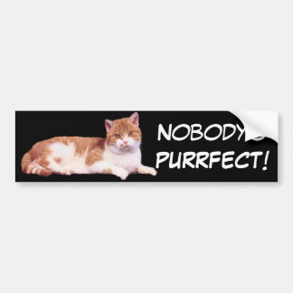 Cat Orange & White Bumper Sticker