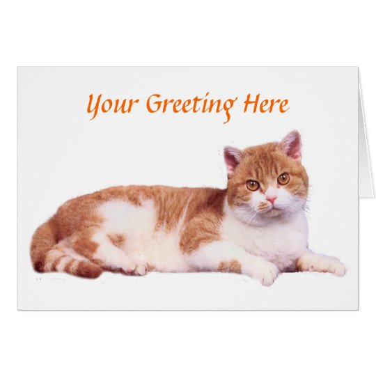 Cat Orange & White Card