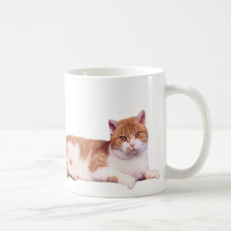 Cat Orange & White Mug
