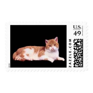 Cat Orange & White  Postage Stamp