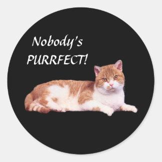 Cat Orange & White Sticker