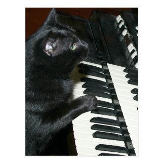 Cat organ recital postcard
