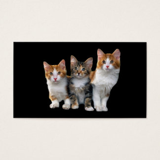 Cat Outside The Box Business Card