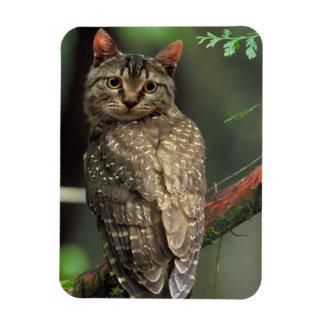 Cat Owl Magnet