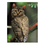 Cat Owl Postcard
