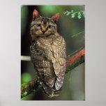 Cat Owl Print