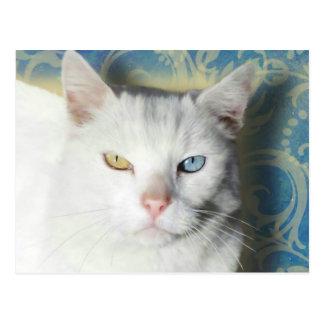 Cat - Patrick the White Cat Postcard