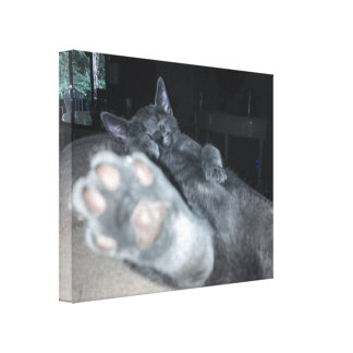 """Cat Paw 20""""x16"""" Stretched Canvas Print"""