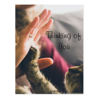 Cat Paw Giving High-five Postcard