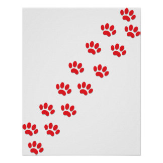 Cat Paws Poster