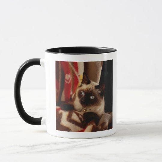 Cat peeking through quilt mug