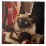 Cat peeking through quilt tile