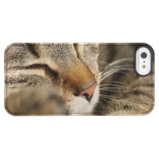 cat permafrost iPhone SE/5/5s case