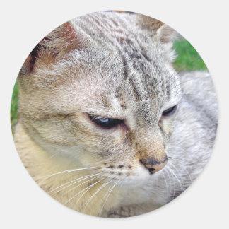 Cat pet animal classic round sticker