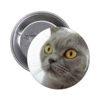 Cat Pet Animal Grumpy Frown Peace Love Destiny Pins