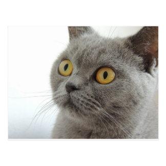 Cat Pet Animal Grumpy Frown Peace Love Destiny Postcard