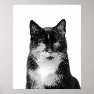 Cat pet animal photo black and white nursery kids poster
