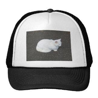Cat pet animal trucker hat