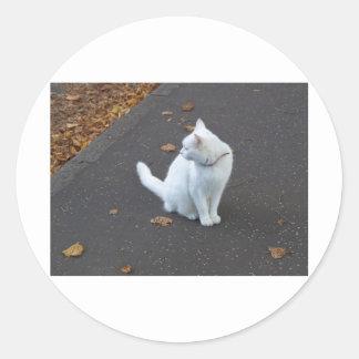 Cat pet classic round sticker