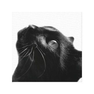 Cat pet cute animal photo black and white canvas print