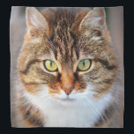 """Cat Photo Bandana<br><div class=""""desc"""">Cute cat photo. Great gifts for cat lovers.</div>"""