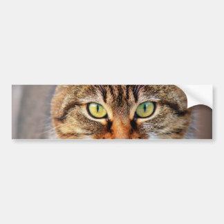 Cat Photo Bumper Sticker