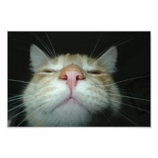 cat photo print