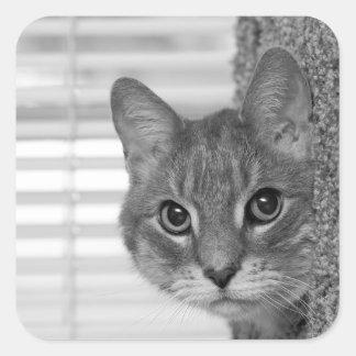 Cat Photo Square Sticker