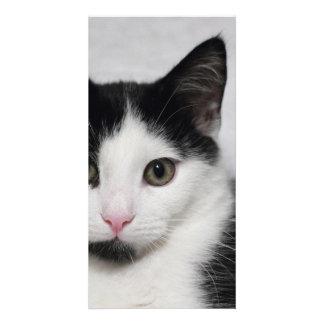 cat photo cards