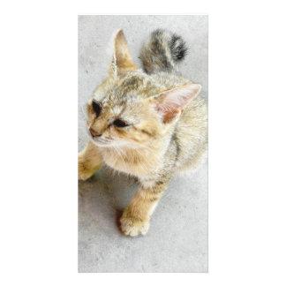 cat photo card