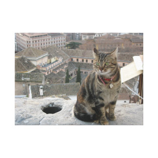 Cat photography Single Canvas Print