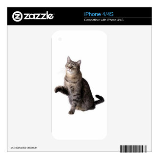 cat picture decals for the iPhone 4S