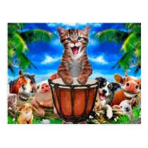 Cat playing drum - farm animals postcard