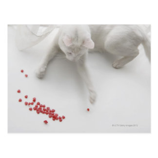 Cat playing with heart shaped candy postcard
